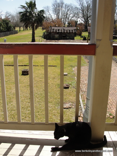 cat's-eye view from plantation house at Laura Plantation in Vacherie, Louisiana