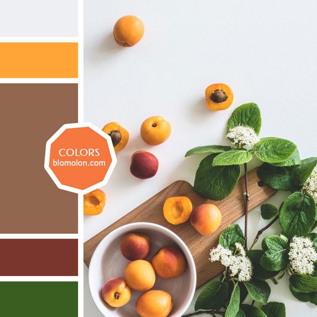 variedad_en_color_moodboard_76