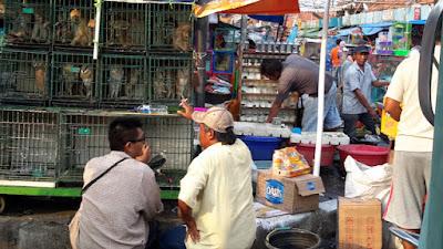 Perdagangan Satwa Liar Di Jakarta Tak Terkendali