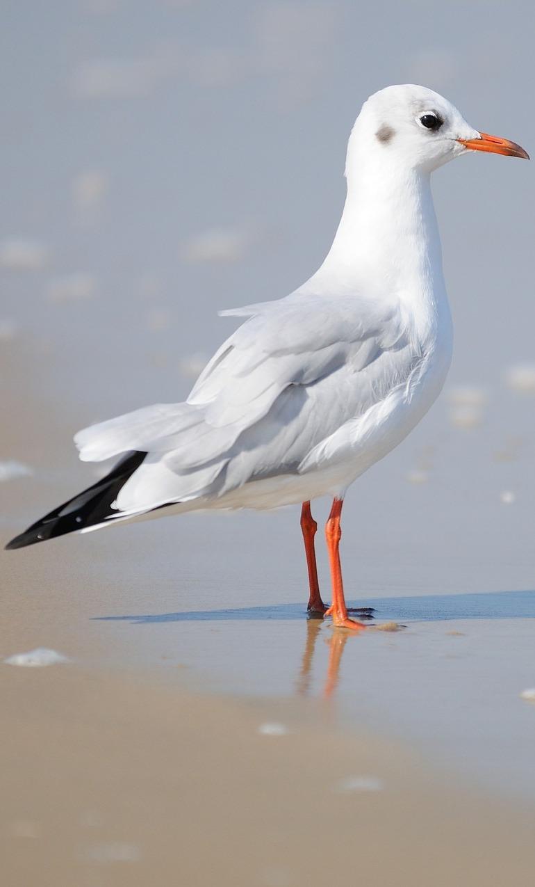 A seagull enjoying the beach.