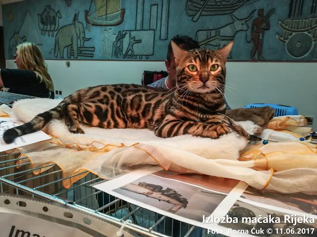 Međunarodna revijalna izložba mačaka Rijeka