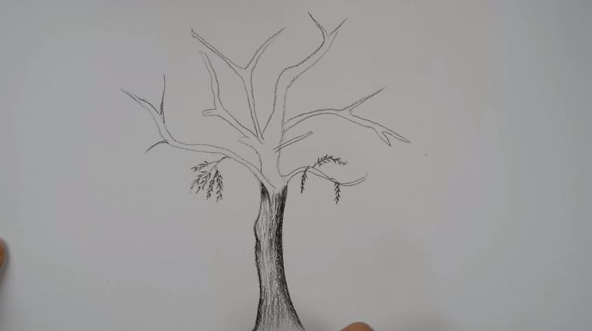 تعلم رسم شجرة بالرصاص خطوة بخطوة للمبتدئين تعلم الرسم