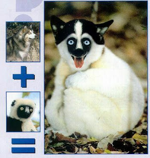 Montagens do Photoshop com animais.