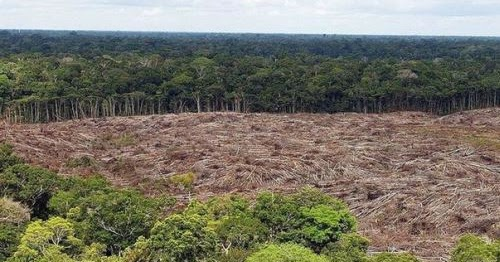 Advierten%2bque%2bla%2bdeforestaci%25c3%25b3n%2bde%2bla%2bamazon%25c3%25ada%2bse%2bacerca%2ba%2bun%2bpunto%2bde%2bno%2bretorno