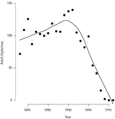 Population of Tasmanian tigers Thylacines before their complete extinction in the 1930s