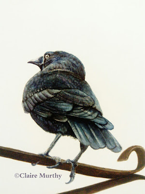 watercolour painting of a british bird crow