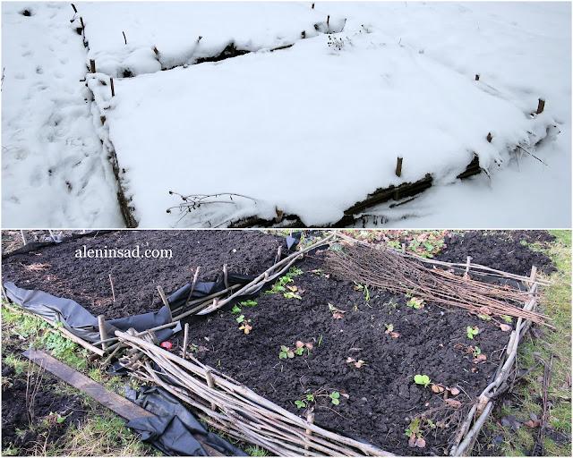 январь, зима, снег, грядки, аленин сад, земляника, высокая грядка из прутьев ивы,
