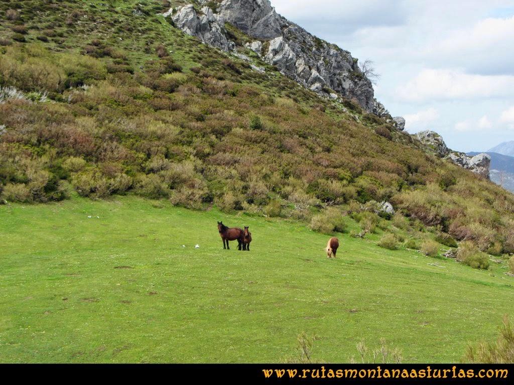 Ruta Peña Redonda: Pradera con caballos