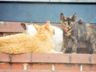 gatti,animali,bestie,felini