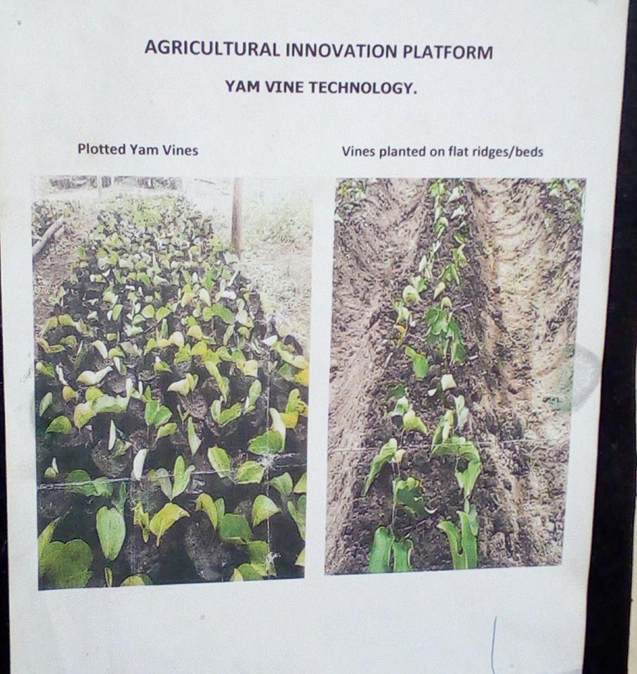 Yam Vine Technology