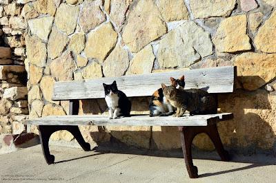 castielfabib-gatos-caseros