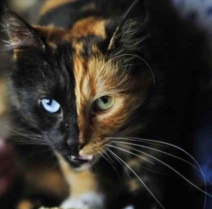 dos caras-gata-quimera-misterios