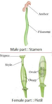 Asexual reproduction in plants in hindi