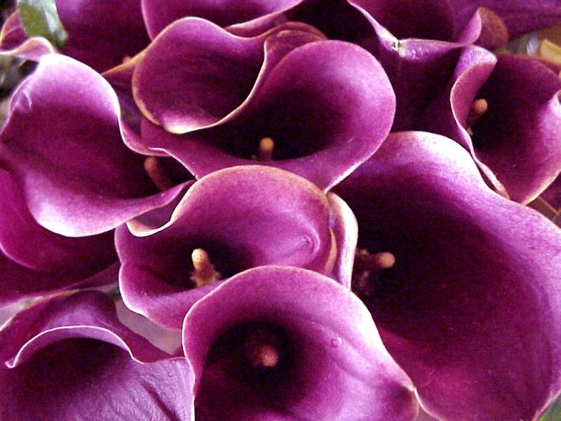 Wedding Flower Purple Background Wallpapers