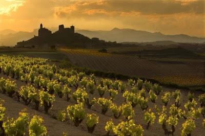 Spektakulärt landskap. Vinodling i Rioja.