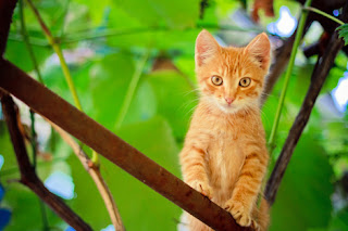 Photo of an Orange Kitten in a Tree