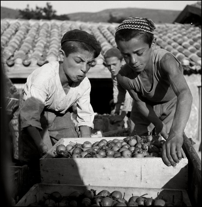 Крымскотатарские дети на сборе урожая груши, 1943 год
