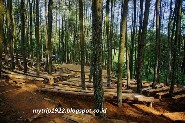 Hutan Pinus Imogiri-Yogyakarta