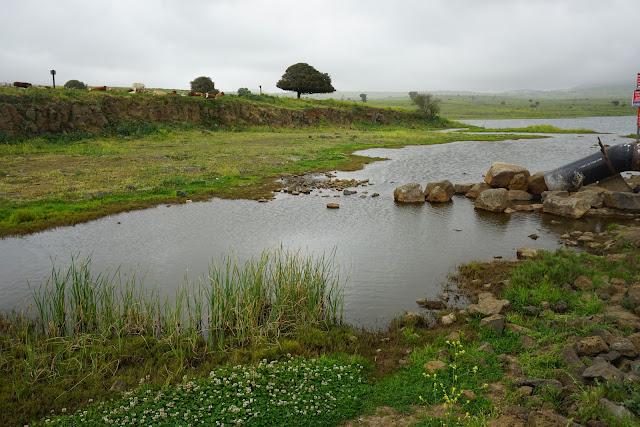 מים במאגר עורבים