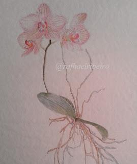 phalenopsis em aquarela