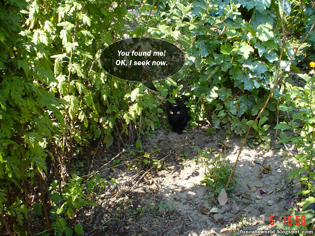 Cat in Vineyard picture