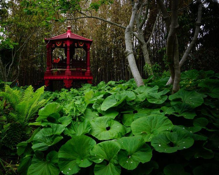 Sakonnet Garden. Rhode Island. Petasites y Bamboo en The Mogul pavilion