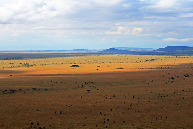 Buy Canvas Wall Art of Serengeti Landscape