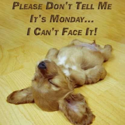 dont tell me its monday funny Monday quotes memes