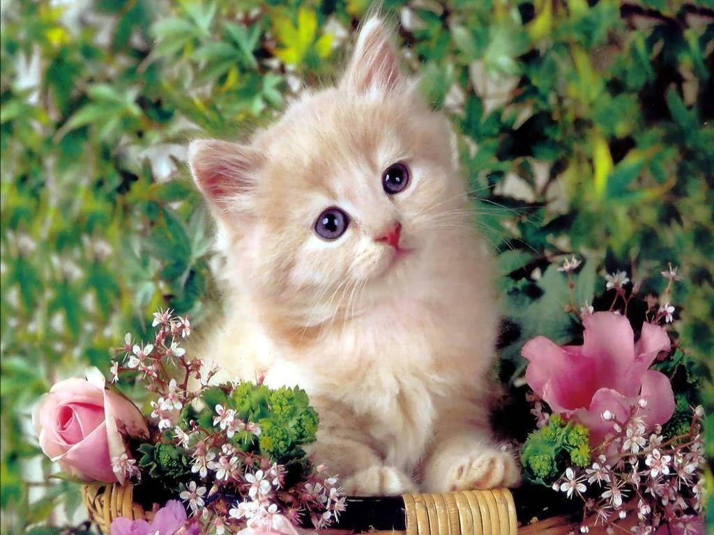 17 Best Ideas About Cute Cat Wallpaper On Pinterest Cat Phone