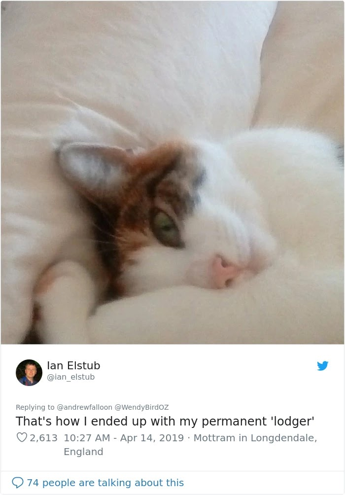 Man Recovering From Surgery Woke Up To Find A Stranger Cat Cuddling Him
