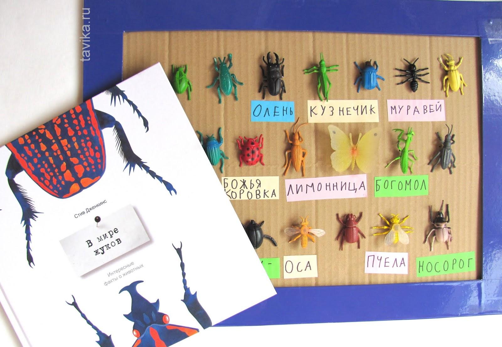изучаем жуков с детьми