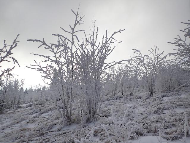 Na górze jest już zimowo pełną gębą