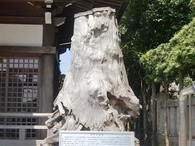 諏訪神社御神木