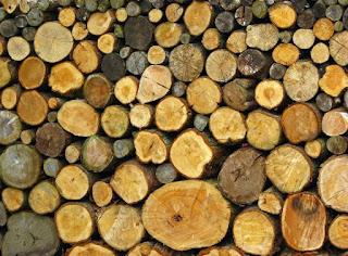 Jenis macam kayu jati waru karater trik tips kayu umpan tiruan