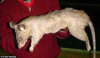 Endtime!!! Rat eats up 3-month old baby alive (Photo)