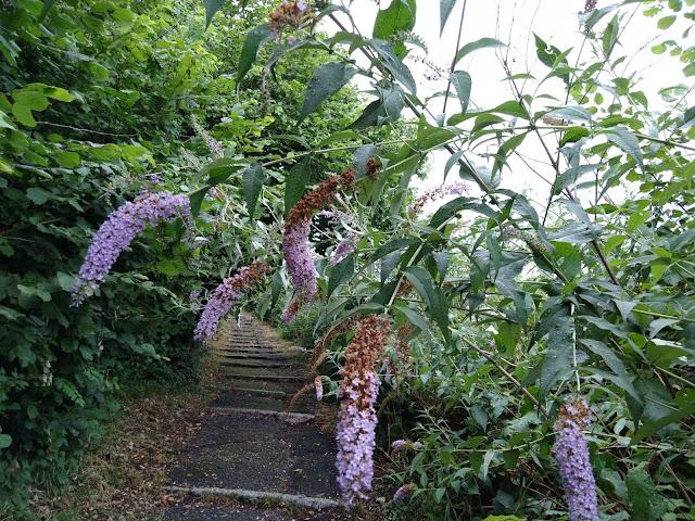 Albero delle Farfalle Naturalizzato
