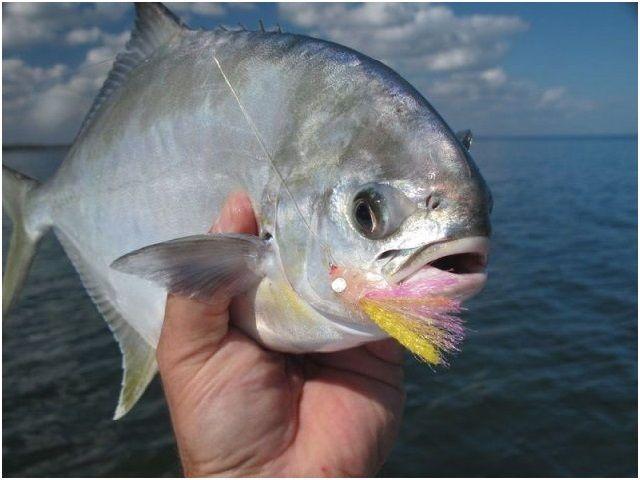Nama Nama Ikan Laut Dangkal Dan Dalam Bisa Dikonsumsi