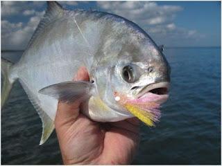 Nama Nama Ikan Laut Dangkal POMPANO