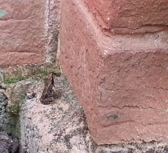 A Baby Frog Sitting on a Wall