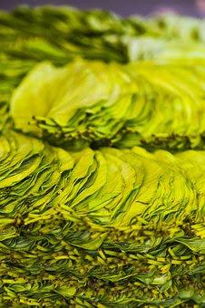 daun sirih,manfaat daun sirih,khasiat daun sirih