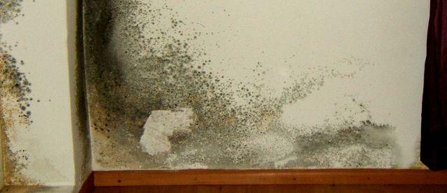Amicomario muffe un serio pericolo per la nostra salute - Togliere umidita in casa ...
