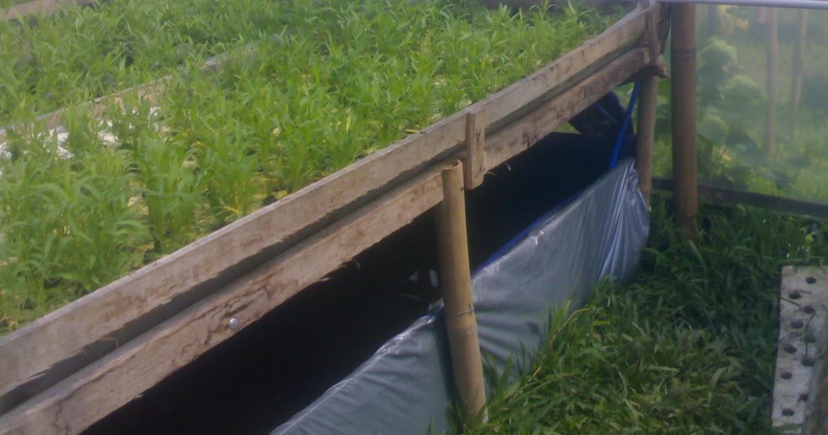 Contoh Bisnis Plan Budidaya Ikan - Rasmi J