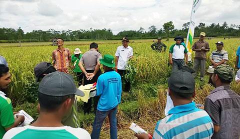 Temu lapang Dinas Pertanian dengan Kelompok Tani