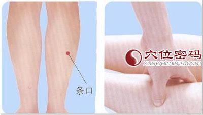 條口穴位 | 條口穴痛位置 - 穴道按摩經絡圖解 | Source:xueweitu.iiyun.com