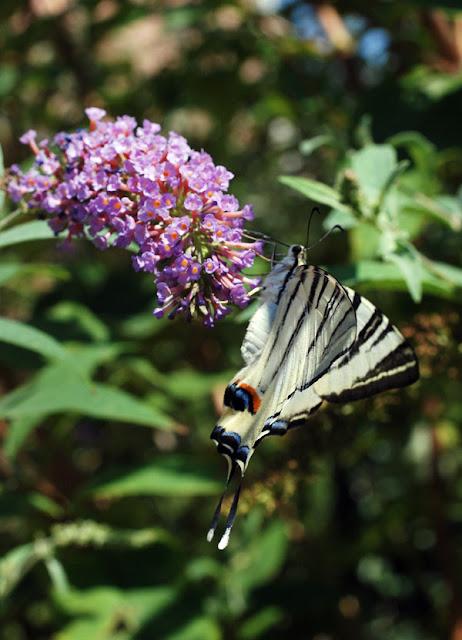 Una Bussola Per Scoprire Il Mondo Delle Farfalle Insetti In Axipix