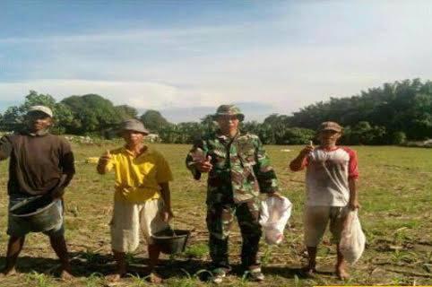 Seluas 15 Rante Tanaman Jagung Dipupuk Babinsa Koramil 02 / Selesai