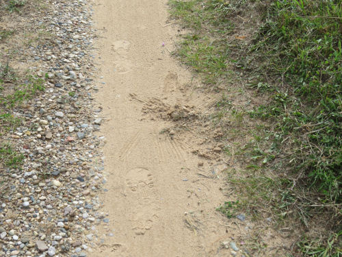 covered scat in a sandy driveway