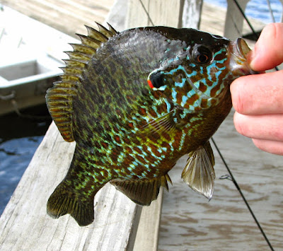 Northview diary for Ny fishing regulations