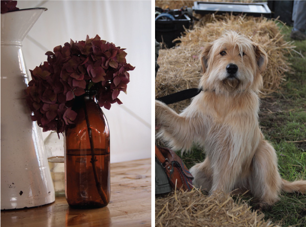Dogs and hydrangeas at The Good Life Experience