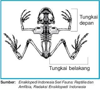Image Result For Gambar Katak Besar